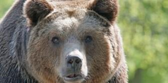 Niedźwiedzie zagościły w MIŚS-iach na dobre
